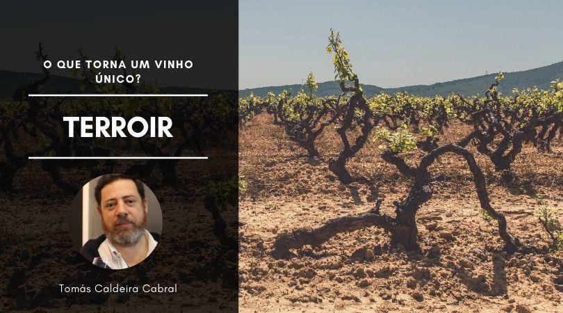 Terroir – O que torna um vinho único?