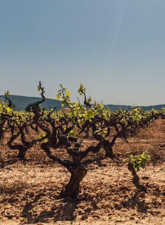 Vinhos Naturais
